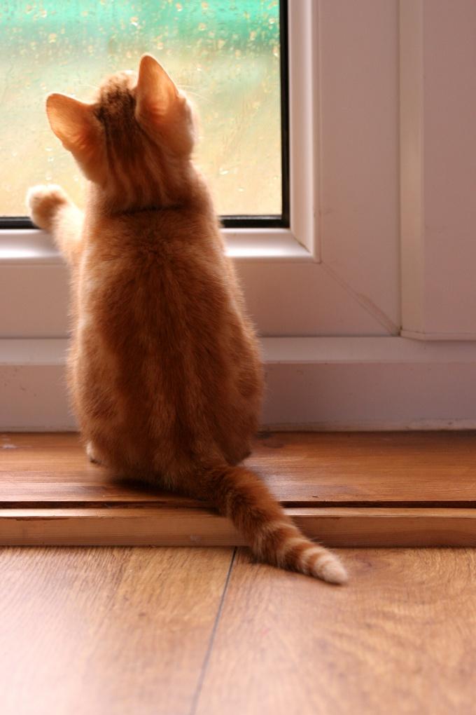 как пристроить кошек