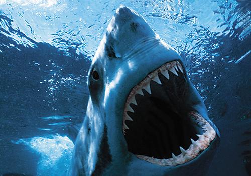 Как спастись от акулы