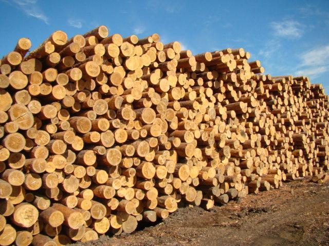 Как продать лес