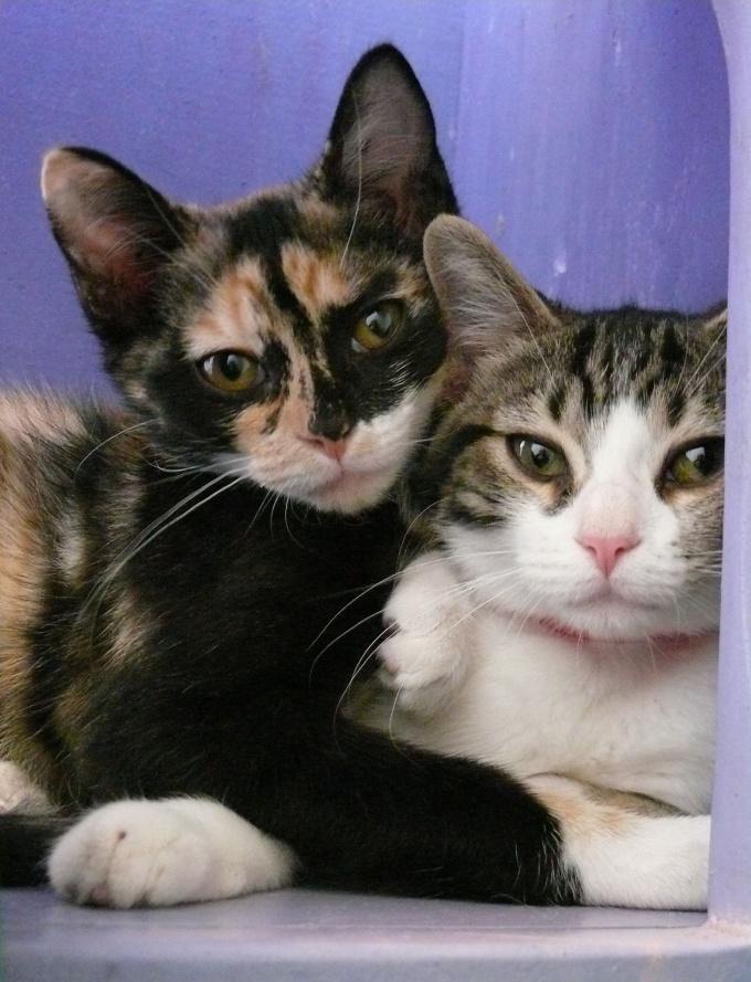 Как найти кота кошке