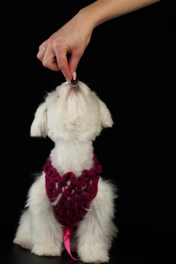Как надрессировать свою собаку