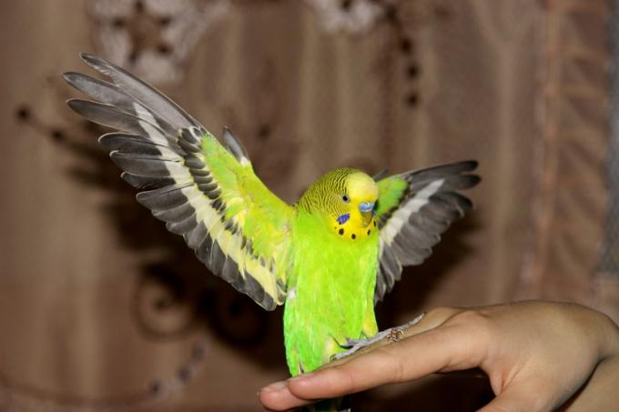 переноски для попугаев