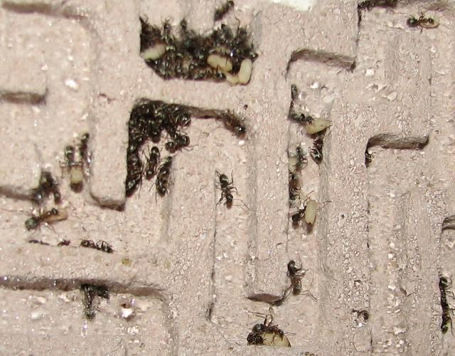 Как сделать муравьиную ферму