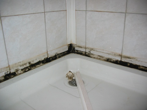 Как убрать плесень из ванны