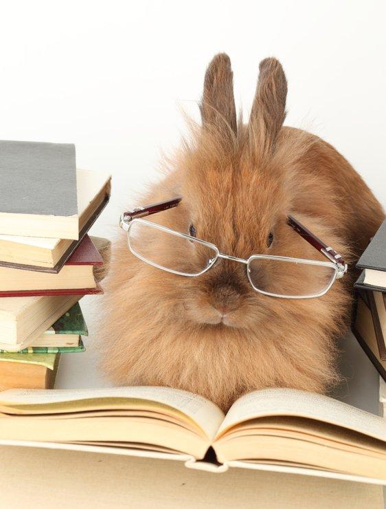 как отличить карликового кролика от обычного
