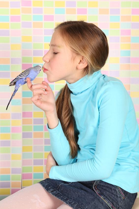 Как приручить птицу