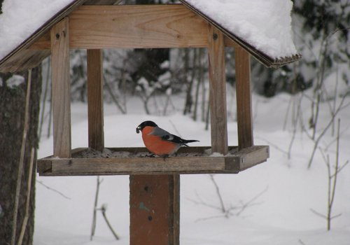 Как охранять птиц