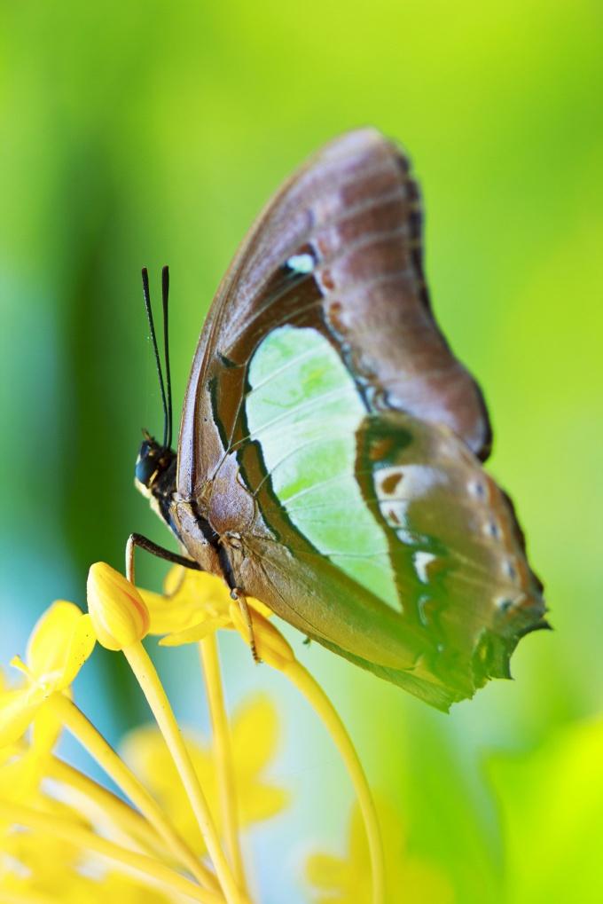Как поймать бабочку