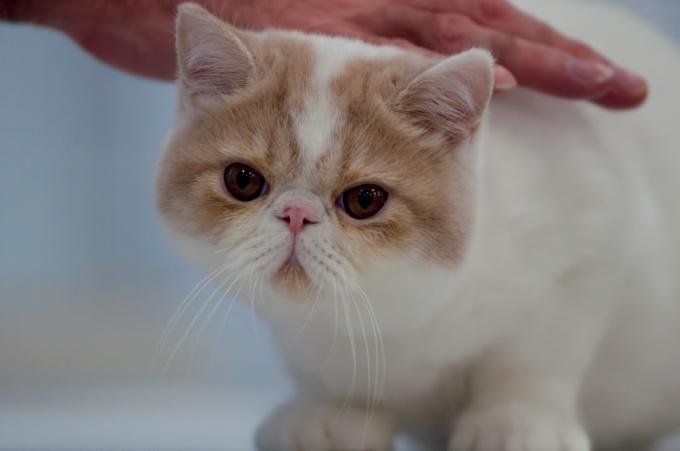 Как сделать кота ласковым