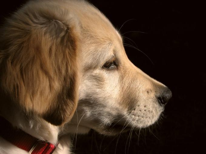 как отучить собаку кусать руки