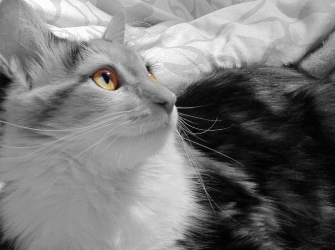 как узнать мальчик или девочка у котят