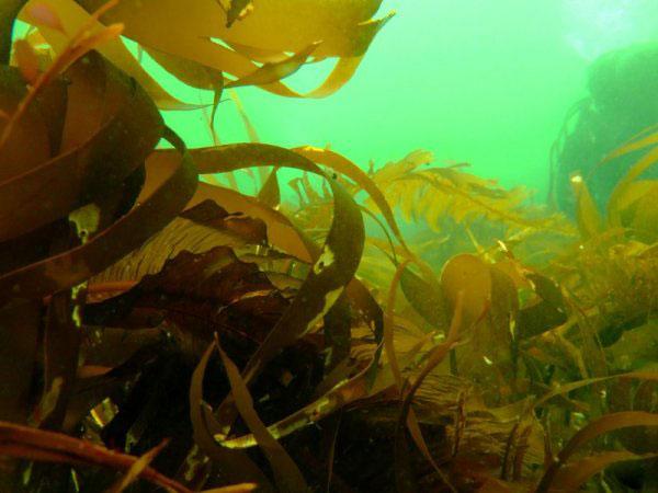 How to prepare dried seaweed