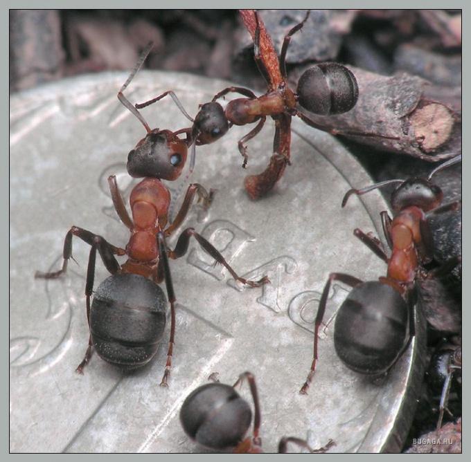 Как избавиться от мелких муравьёв