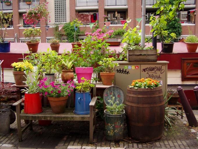 Как пересадить купленный цветок