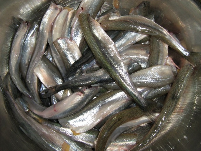 How to clean capelin