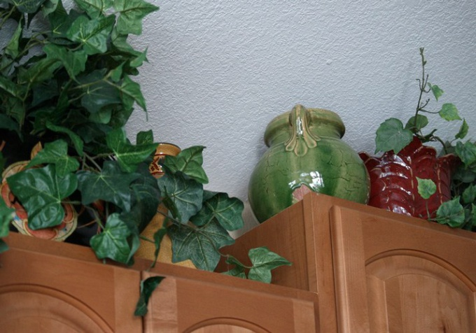 Как спасти комнатное растение