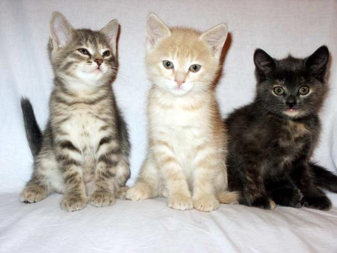 как лечит кошку от простуды домашных услоиях