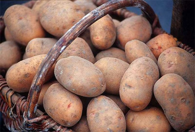 How to pick the early varieties of potatoes