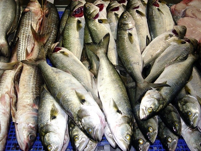 How to identify fresh fish