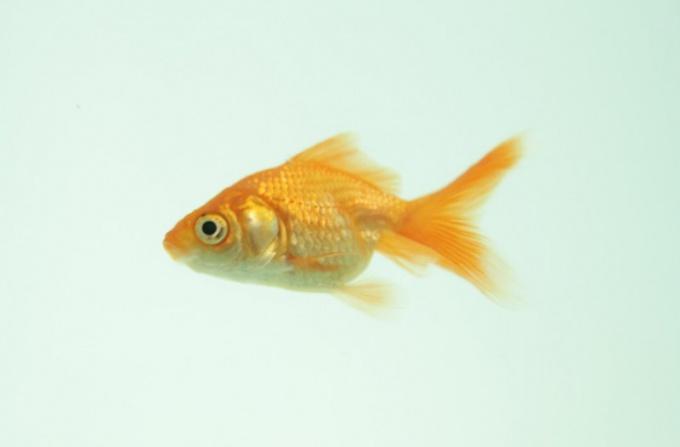 Как найти объем аквариума