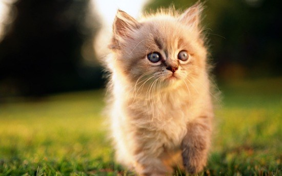 How to treat ringworm in a kitten