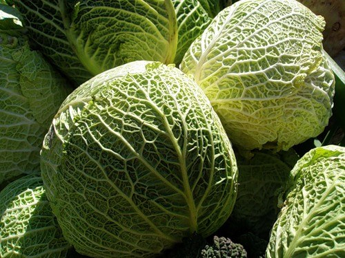 How to store Savoy cabbage