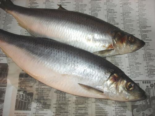 How to steep salted herrings