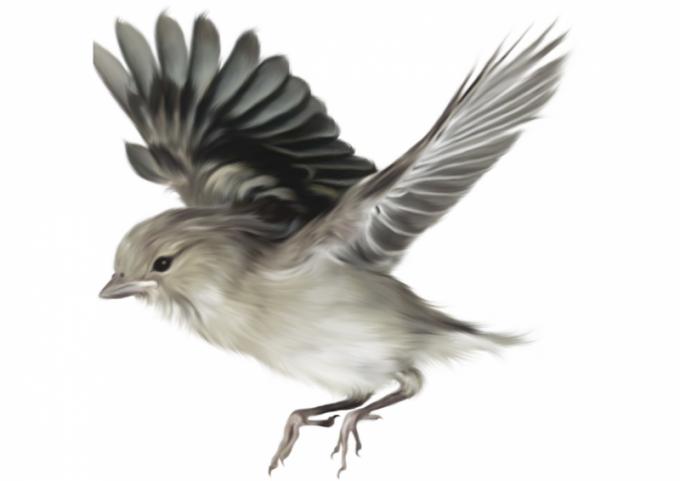 Как нарисовать летящую птицу