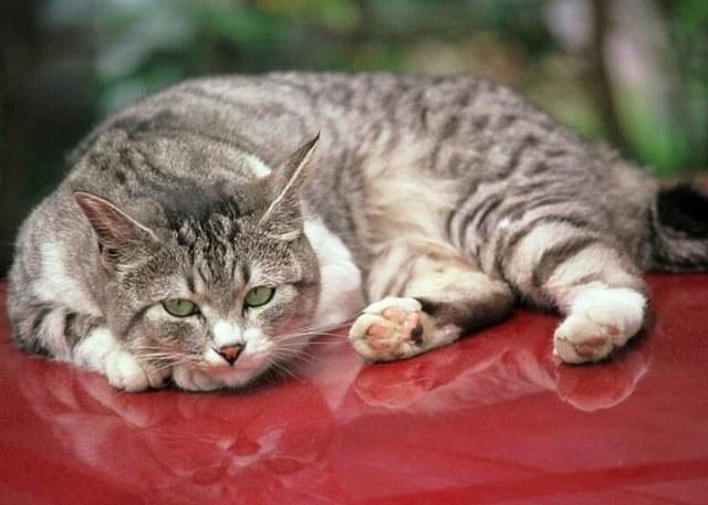 отравление кота лечение