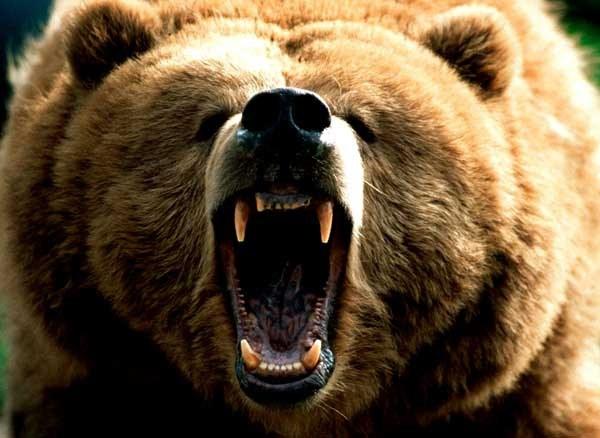 Как отпугнуть медведя