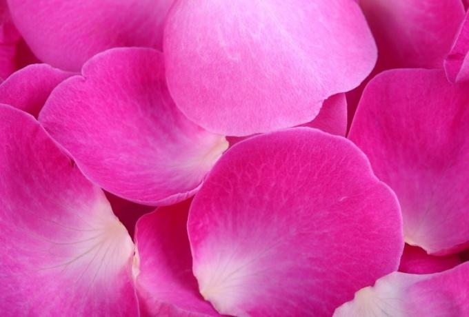 Как хранить лепестки роз