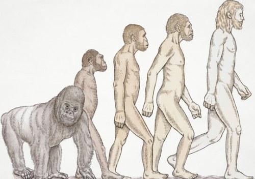Что такое антропогенез