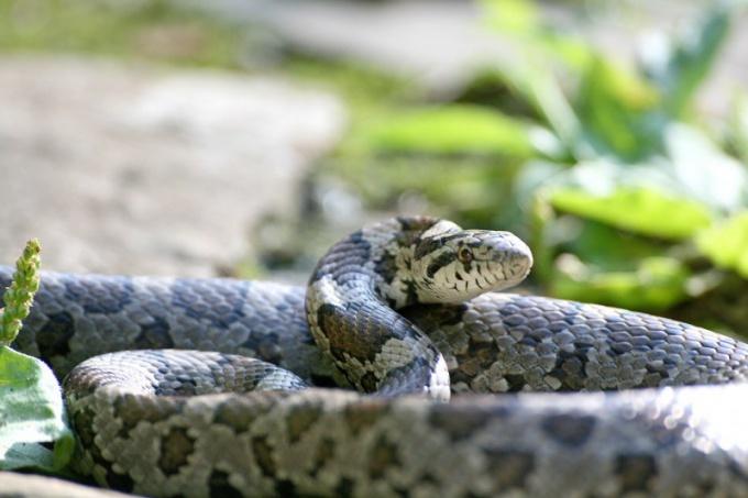 Как защитить себя от укуса змеи