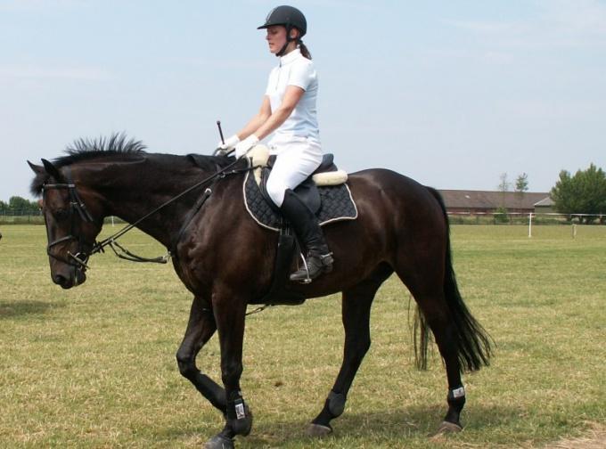 Как обучать молодую лошадь