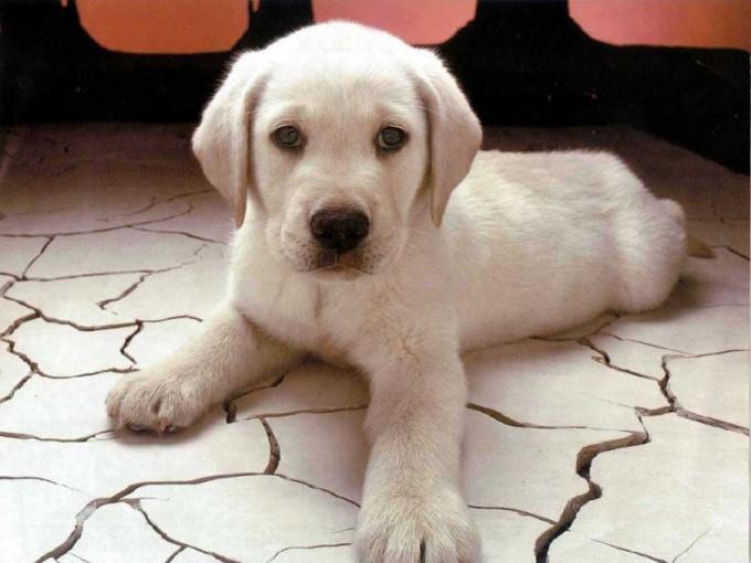 имя для собаки алабая