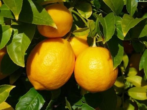 Как формировать лимон