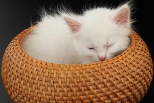 кошка мама умерла остались котята как правильно их кормить