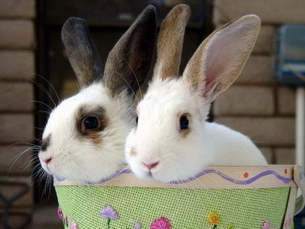 как лечить ринит у кроликов