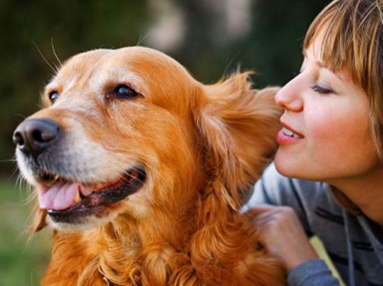 Как избавиться от страха перед собаками