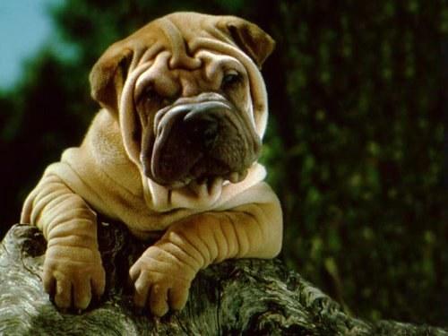 как убрать аллергию у собаки