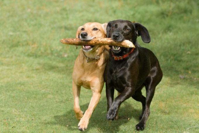 How to teach a dog to fetch a stick
