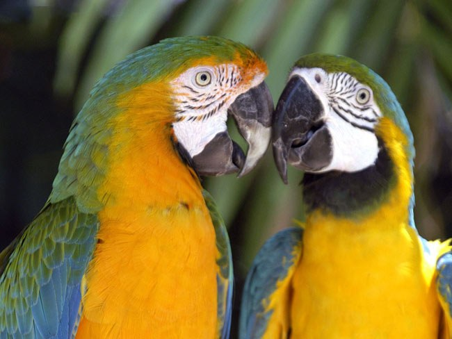 как остановить кровотечение у попугая