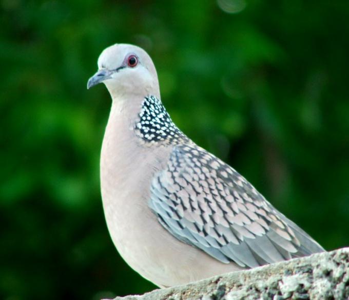 Как отпугнуть голубей с балкона