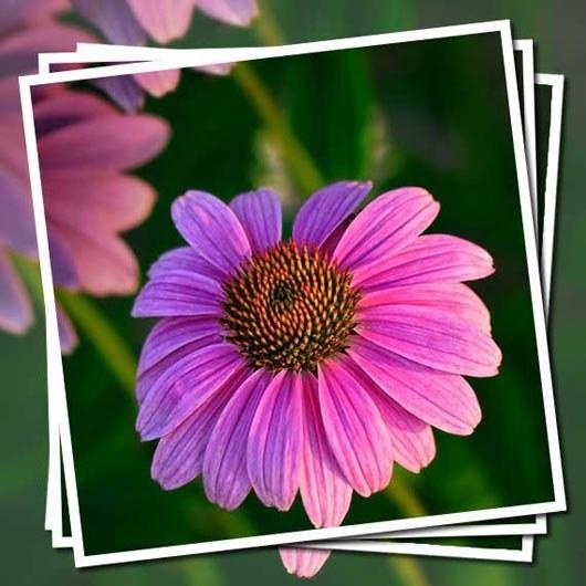 Как вставить несколько фотографий в рамку в Фотошопе