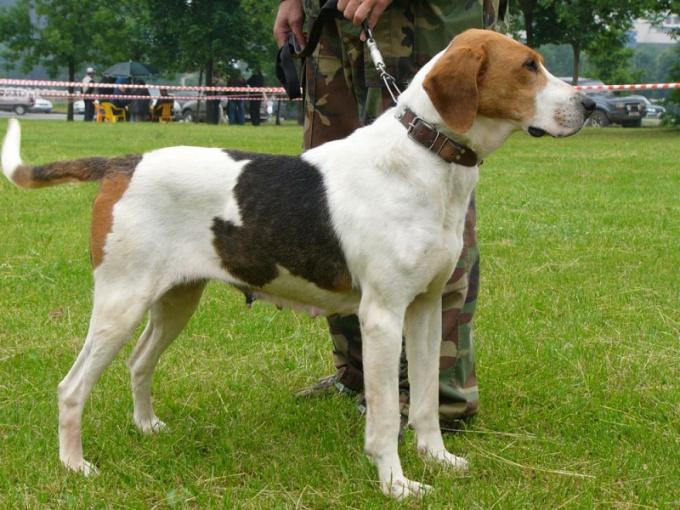 как на тоскать охотничьих собак