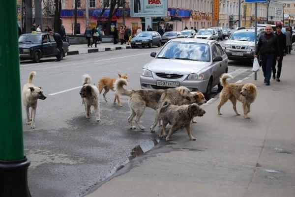 защититься от бродячих собак