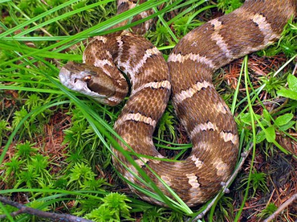 Как вывести змей