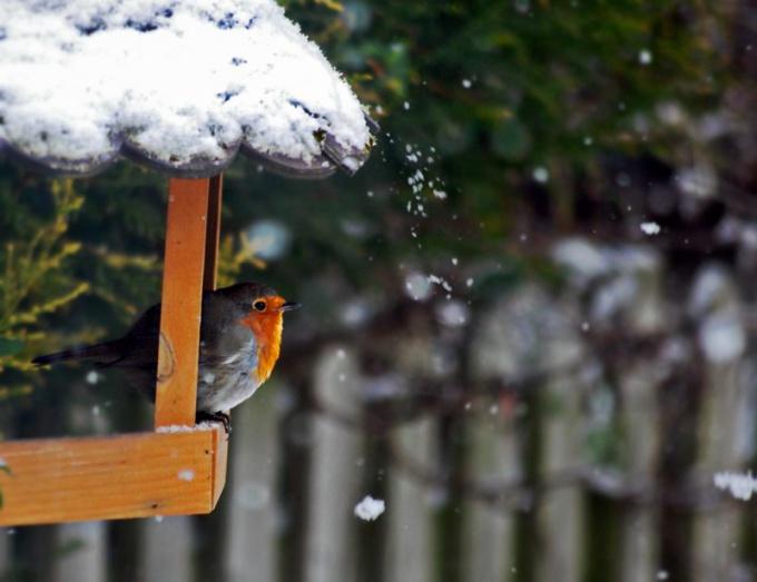 Как сделать кормушку для птиц из картона