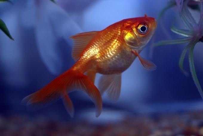 солевой раствор для рыбок против манки