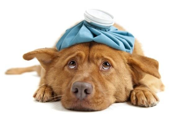 какие принимать препараты при зуде у собак